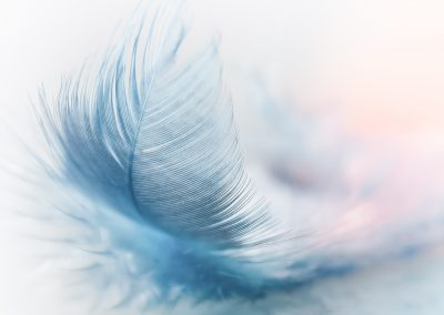 feather-3010848_1920